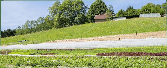 Le jardin de la berthe Le petit maraichage
